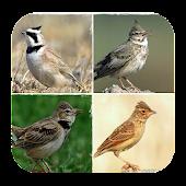 Download Ragam Kicau Burung Branjangan APK to PC