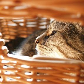 Sunbathing by David Shayani - Animals - Cats Portraits ( olympus e300, cat, high iso, unedited, family pet, close up, sun, portrait, united states of america, four thirds, roeland park kansas, artistic, feline, light, kitty, animal )
