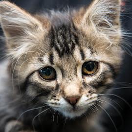 Hello by Michele Williams - Animals - Cats Kittens ( kitten, cat, fluffy, fur, whiskas, cute, eyes,  )