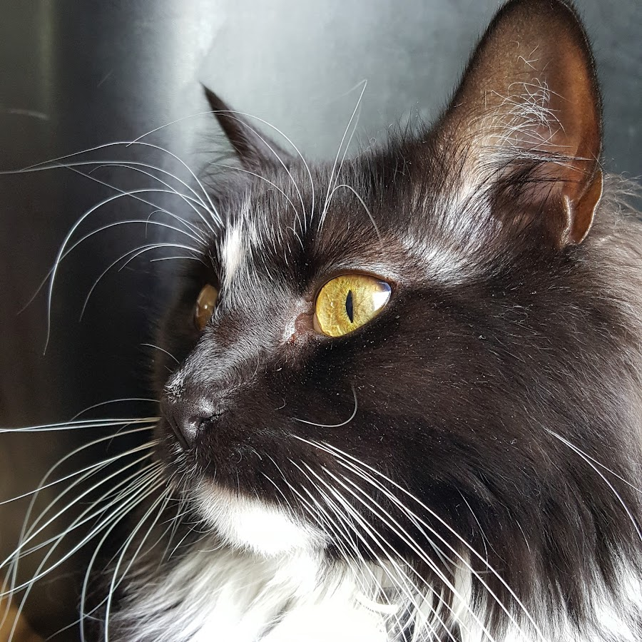 look over there by Sheilla Johnson - Animals - Cats Portraits