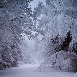 Snow Day by Keith Frost - Landscapes Weather ( dreamy, winter, tress, lighting, snow, snowday )