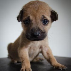 puppie-1.jpg