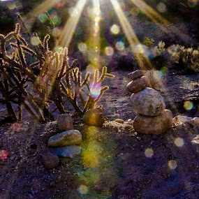 Desert sunset lens odyssey by Steve Outing - Nature Up Close Other plants ( light rays, desert, light patterns, sunset, sunlight, cactus )