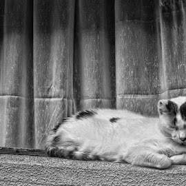 by Tracey Dolan - Animals - Cats Portraits