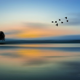 Solitudine by Sergio Papandrea - Landscapes Sunsets & Sunrises ( tree, colors, birds, panorama )
