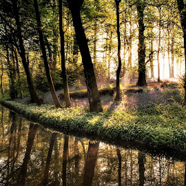 Early Morning Sunrise by Russell Mander - Uncategorized All Uncategorized ( sunrise, waterscape, wild flowers, river, trees )