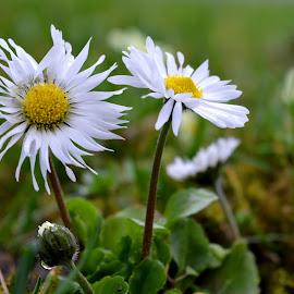 by OL JA - Flowers Flowers in the Wild