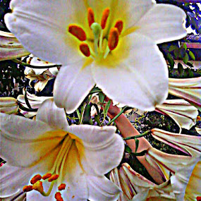 by Natasha Jordanova - Nature Up Close Flowers - 2011-2013