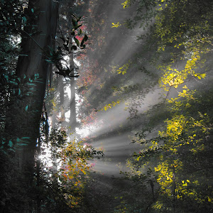 0911-SunRays04color.jpg
