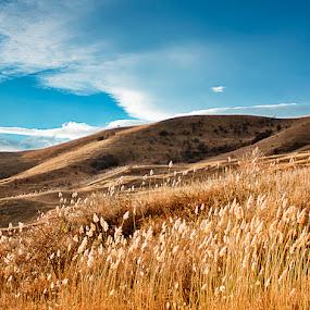 Golden Fields by Eduard Moise - Landscapes Mountains & Hills