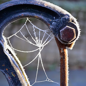 Winter Web by Marco Bertamé - Nature Up Close Webs ( minus, winter, cold, metal, ice, web, spider, hoarfrost )