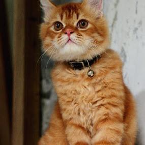 wooww,,,, by Fahmi Hakim - Animals - Cats Kittens