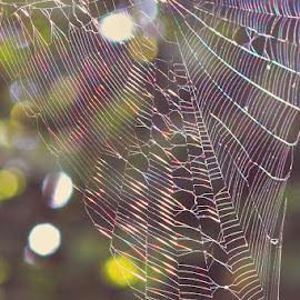 geometry by Shashi Javali - Nature Up Close Webs ( glistening, colorful, light graffiti, bokeh, spider web )