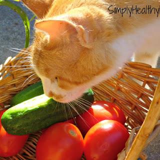 Balsamic Cucumber Salad Recipes