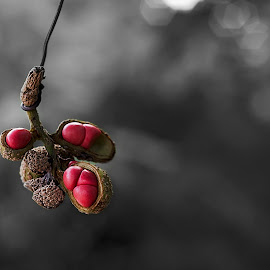 The lonely Red by Abhinav Maurya - Nature Up Close Other Natural Objects