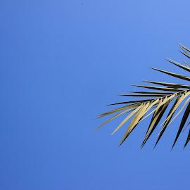 Blue Sky by Fahad Kazi - Landscapes Weather ( picture, picoftheday, daytime, photograph, sky, blue, photojournalism, daylight, photography, photooftheday )