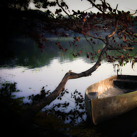 Forsaken Glory by Brendon Kollogov - Transportation Boats ( water, dead and decaying, tree, lake, boat )