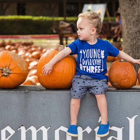 I Want All These Pumpkins by Bonnie Davidson - Babies & Children Toddlers ( orange, person, photograph, warm, church, blonde hair, pumpkins, round, candid, side profile, city, halloween, pumpkin patch, tree, words, t-shirt, blue, toddler seated, fall, curls, shorts, brown, boy, granite,  )