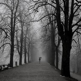 Rainy day by Aleksandra Jereb - City,  Street & Park  Historic Districts ( ljubljanski grad, sneg, megla, park, fog, ljubljana, castle, rain, dež )