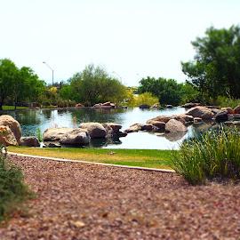 Lake View by Toni Krekelberg - City,  Street & Park  City Parks ( park, green, parks, lakes, lake )