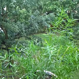 from my window by Urszula Masilela - Instagram & Mobile iPhone ( green, plants, summer, asparagus, light )