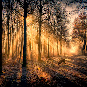 Dog shower by Egon Zitter - Landscapes Forests ( harp, beam, forest, dog, light, woods )