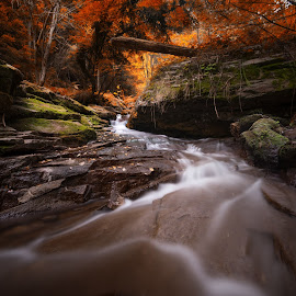 autumn comes by Atanas Donev - Landscapes Forests ( leafs, nature, autumn, forest, river )