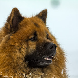 Dita by Iztok Urh - Animals - Dogs Portraits