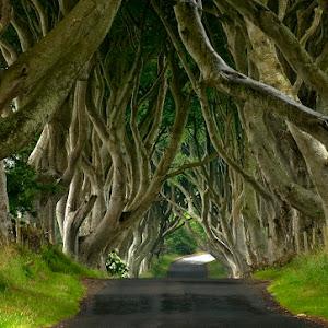 drzewa 1.jpg