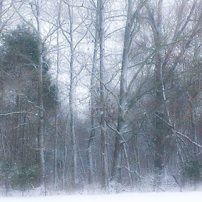 Winter trees by Amanda Burton - Nature Up Close Trees & Bushes ( winter, snow, weather, landscape )