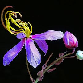 Bud n bloom by Asif Bora - Digital Art Things (  )