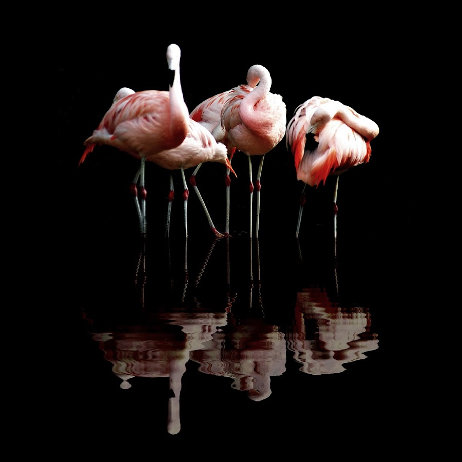 Vice by Doc Maowi - Animals Birds ( nature, art, fine art, wildlife, birds )