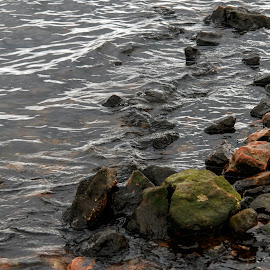 Stones Step from the Lake by Rob Heber - Nature Up Close Rock & Stone ( natural light, detail, waterscape, colorful, moss, rough ground, lake shore, geology, recreation area, clear water, choppy waters, nature, pool, ripples, slippery, wet, rocks, water, boulders, geoligical detail, waves, texture, lake, beauty in nature, rough, moss covered, lake water, rough texture, outdoors, stones )