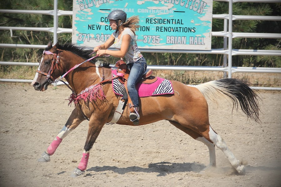 by Lena Arkell - Sports & Fitness Other Sports ( gallop, gymkhana, equine, girl, horse, rodeo, sport, paint,  )