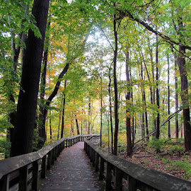 Quest Walkway-Cuyahoga Valley National Park by Christine B. - Landscapes Forests ( cuyahoga valley national park, forest, walkway, woods, quest )