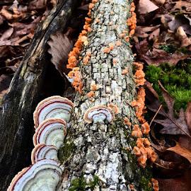 by Miranda DeBruhl - Nature Up Close Mushrooms & Fungi