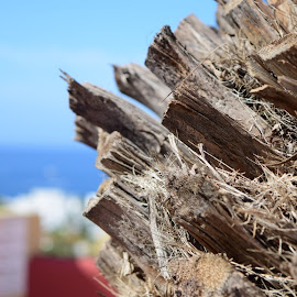 Palm tree cuts offs, sea background. by Barry Simmons - Nature Up Close Other plants