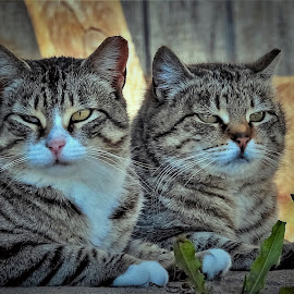 Two  by Sue Delia - Animals - Cats Portraits ( feral, siblings, cats, wild,  )
