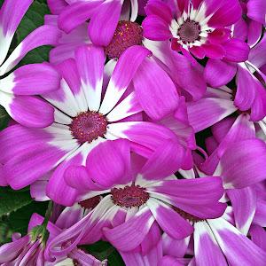 flori frumoase.JPG