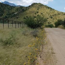 Nature's Roadside Surprise by Tom MostlyGerman - Landscapes Deserts