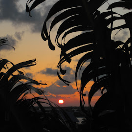 Sunset on Ambergris Caye in Belize  by Terry Palmer - Novices Only Landscapes ( end of the day, ambergris caye, sunset, palm trees, belize, mother nature )