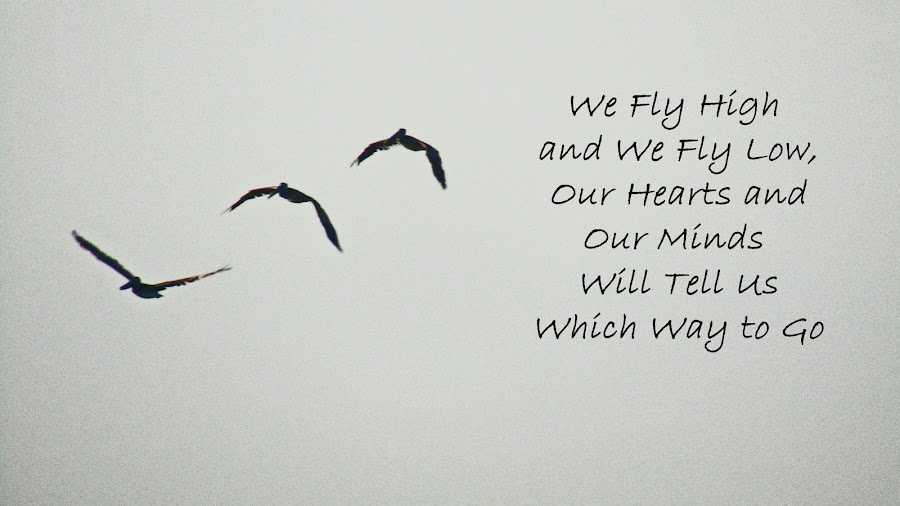 We Fly by Daryl Peck - Typography Quotes & Sentences ( bird, flying, inspiration, novice, quote, birds, inspirational )