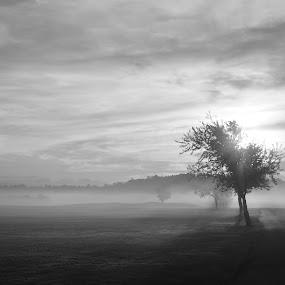 Early morning by Thomas Fitzrandolph - Landscapes Sunsets & Sunrises ( nature, black and white, niagara county ny, trees, summer, nikon d5200, sunrise, lockport ny, sun,  )