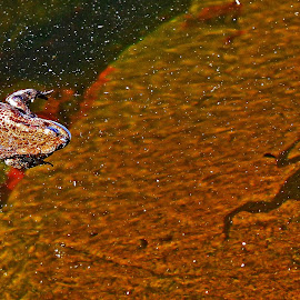 Frog with a shadow by Roar Randeberg - Animals Reptiles ( water, up close, chasing, frog, shadow, dimensions, stone, light )