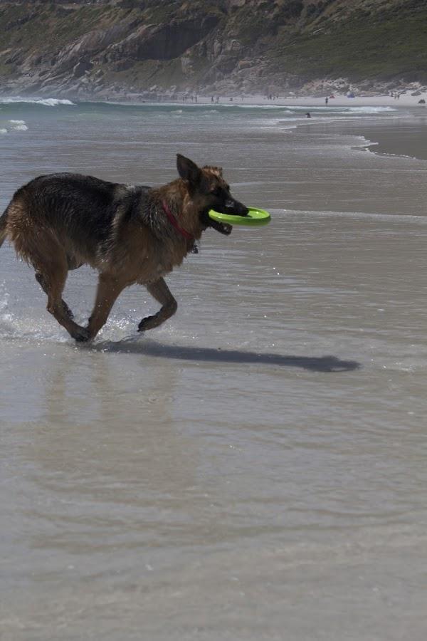 Halfrida by Kent Ko - Animals - Dogs Running