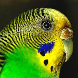 Head by Sunny Joseph - Animals Birds