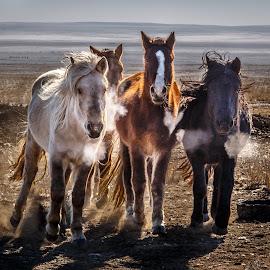 Mongolian Horses by Mark Prusiecki - Animals Horses ( animals, horses, mongolia, travel, travel photography )