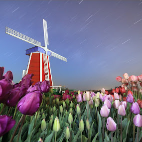 Season Greetings by William Lee - Landscapes Prairies, Meadows & Fields ( sky, stars, long exposure, night, star trails, tulips, windmill, , Spring, springtime, outdoors )
