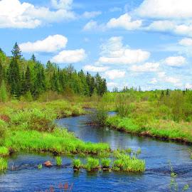by Kym George - Landscapes Prairies, Meadows & Fields