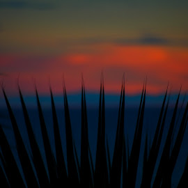Sunset through Palm by Rhonda Kay - Nature Up Close Other plants